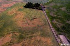 Harmonogram zebrań komisji ds. szacowania szkód w rolnictwie – przyjmowanie wniosków suszowych